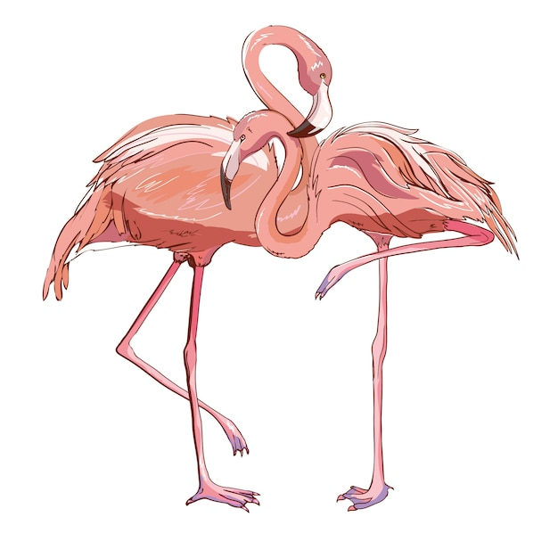 Rosafarbener flamingo getrennt auf weiß. Premium Vektoren