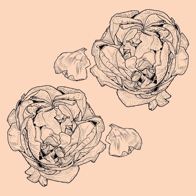 Rosenblume vintage barock Premium Vektoren
