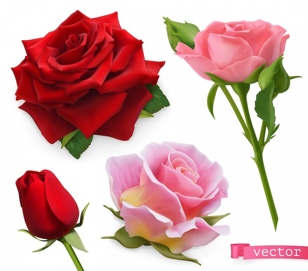 Rote und rosa rosen. realistischer satz des vektors 3d Premium Vektoren