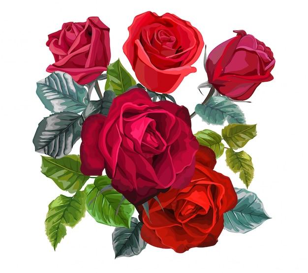 Rotrosenblume auf weiß Premium Vektoren