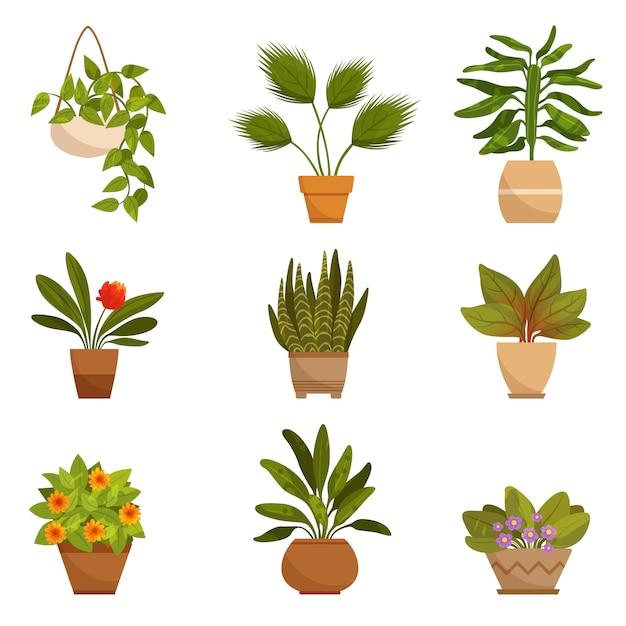 S satz von zu hause dekorativen pflanzen Premium Vektoren