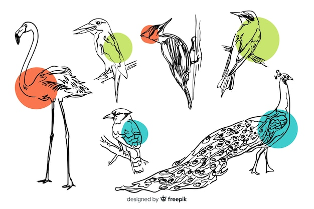 Sammlung des hand gezeichneten exotischen vogels Kostenlosen Vektoren