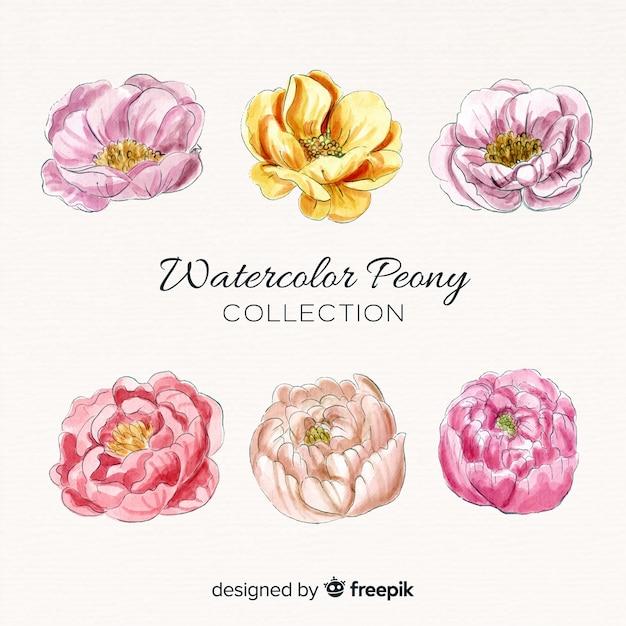 Sammlung elegante aquarellpfingstrosenblumen Kostenlosen Vektoren