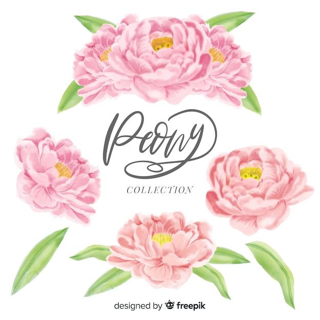 Sammlung elegante pfingstrosenblumen in der aquarellart Kostenlosen Vektoren