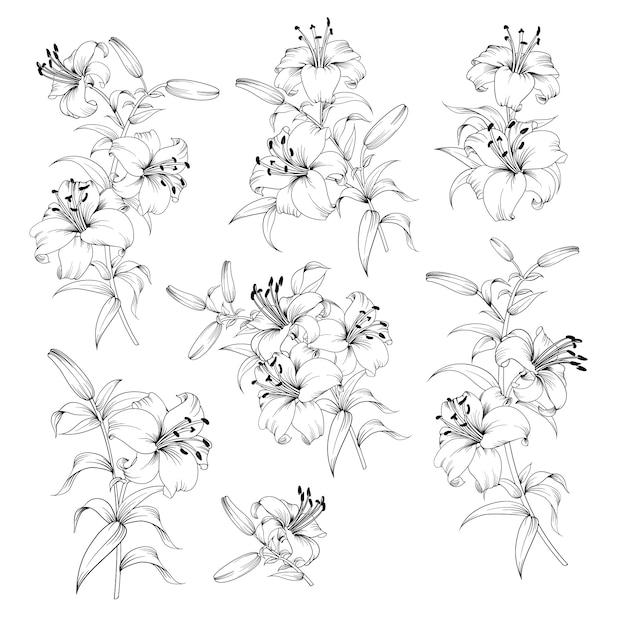 Sammlung lilienblumen auf schwarzweiss Premium Vektoren