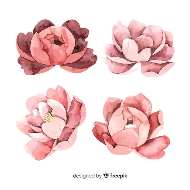Sammlung schöne pfingstrosenblumen in der aquarellart Kostenlosen Vektoren