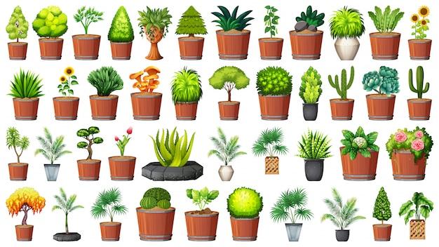 Sammlung topfpflanzen auf weiß Kostenlosen Vektoren