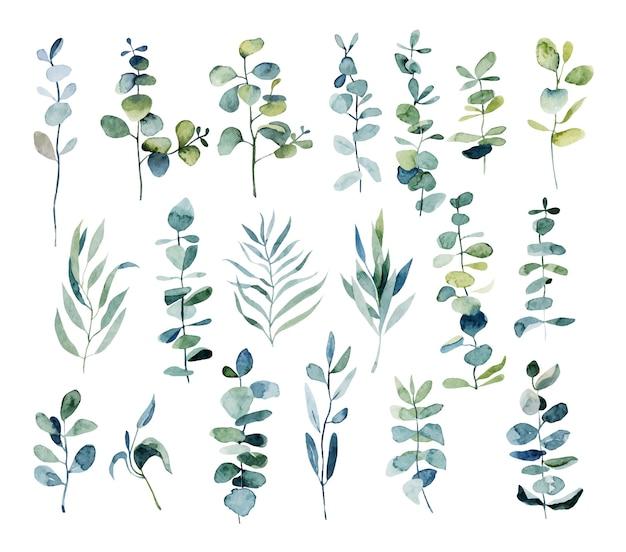 Sammlung von aquarell-eukalyptus-zweigen, botanische elemente lokalisiert auf weiß Premium Vektoren