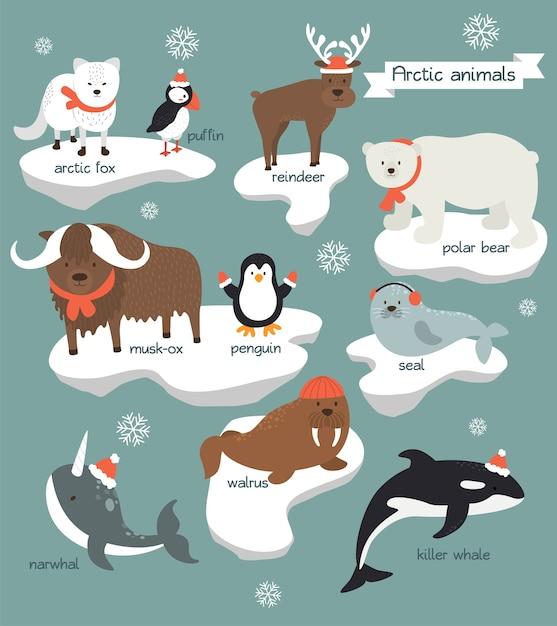 Sammlung von arktischen tieren, die weihnachtskleidung tragen Premium Vektoren