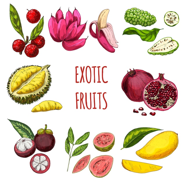 Sammlung von exotischen früchten Premium Vektoren