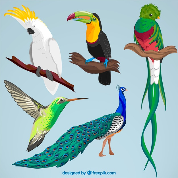 Sammlung von hand gezeichnet exotischen vogel Kostenlosen Vektoren