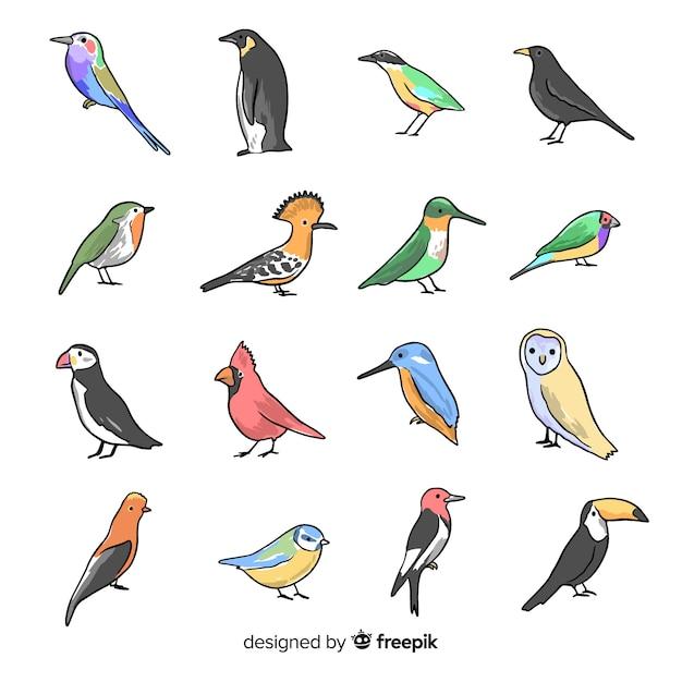 Sammlung von hand gezeichneten vögeln Premium Vektoren