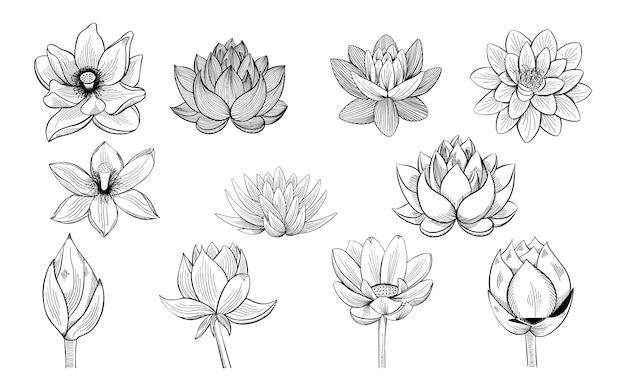 Sammlung von lotus-skizzen. Premium Vektoren