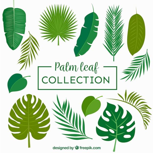 Sammlung von palmblättern Kostenlosen Vektoren