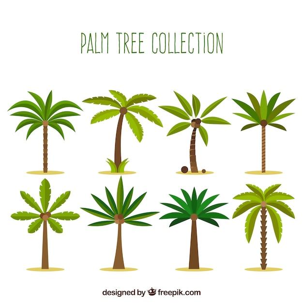Sammlung von palmen in flacher bauform Kostenlosen Vektoren
