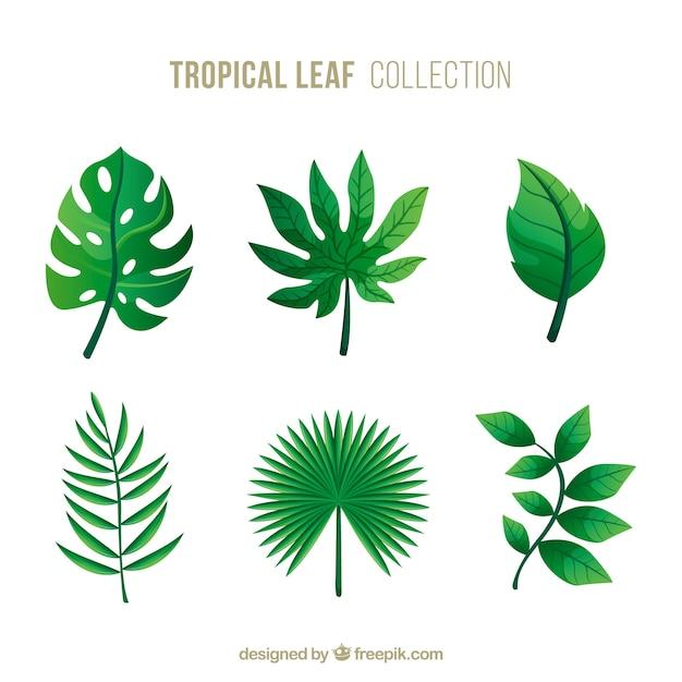Sammlung von tropischen blättern Kostenlosen Vektoren