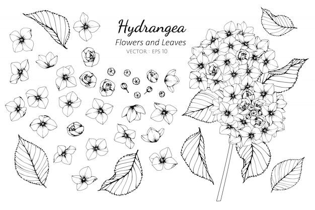 Sammlungssatz der hortensieblume und -blätter Premium Vektoren