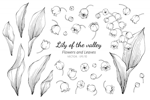 Sammlungssatz der maiglöckchenblume a Premium Vektoren