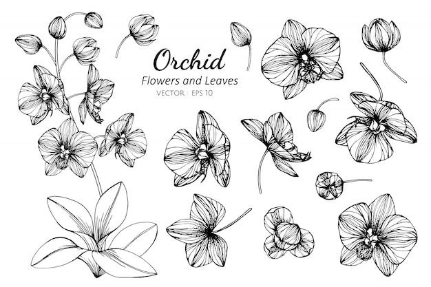 Sammlungssatz orchideenblume und -blätter, die illustration zeichnen. Premium Vektoren