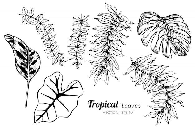 Sammlungssatz tropische blätter, die illustration zeichnen. Premium Vektoren