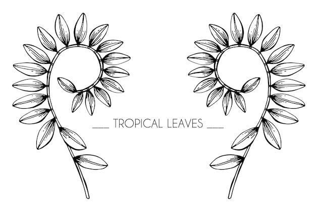 Sammlungssatz tropische blätter zeichnungsillustration. Premium Vektoren