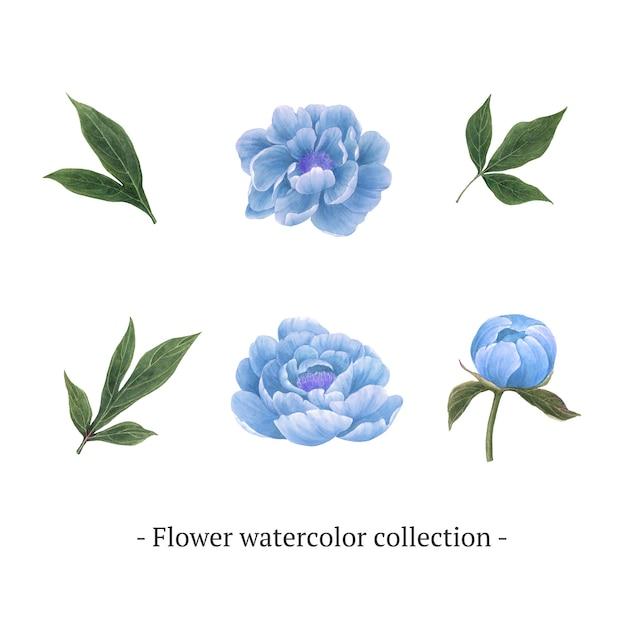 Satz der aquarellpfingstrose, von hand gezeichnete illustration von elementen lokalisierte weiß. Kostenlosen Vektoren