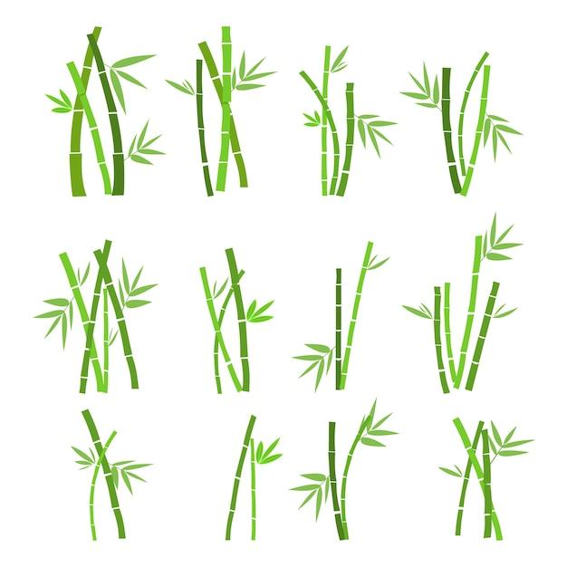 Satz der bambusanlage Premium Vektoren