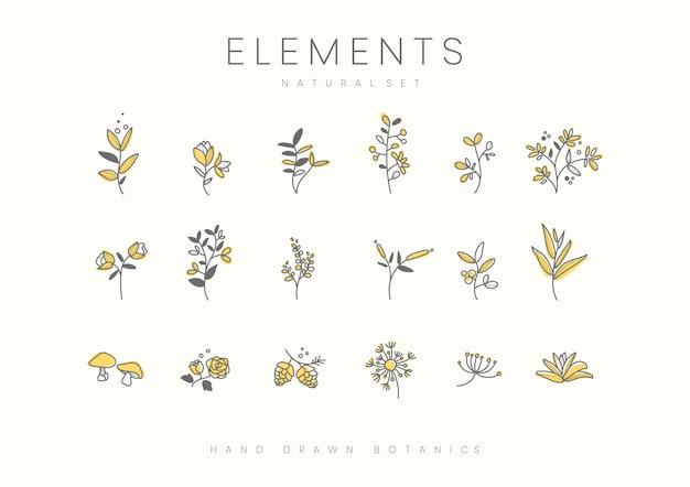 Satz des hand gezeichneten botanischen elementvektors Kostenlosen Vektoren