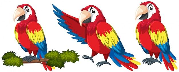 Satz des papageienzeichens Premium Vektoren