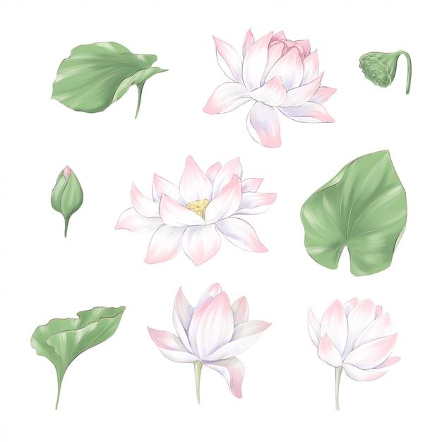 Satz digitaler clipart-blumen und blumensträuße von lotus und seetang Premium Vektoren