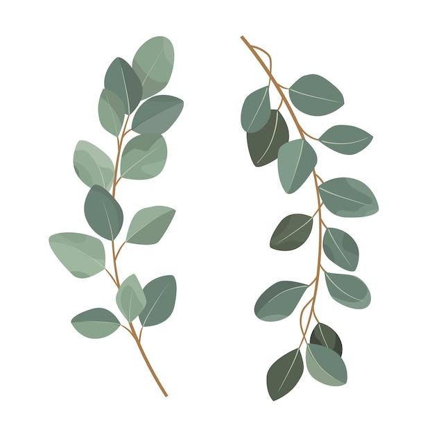 Satz eukalyptusniederlassungen lokalisiert auf weißem hintergrund. Premium Vektoren