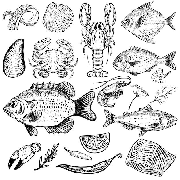 Satz hand gezeichnete meeresfrüchteillustrationen auf weißem hintergrund. fisch, krabben, hummer, austern, garnelen. gewürze. elemente für menü, poster. illustration Premium Vektoren