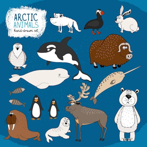 Satz handgezeichnete arktische tiere auf einem kalten blauen hintergrund mit einem eisbären Kostenlosen Vektoren
