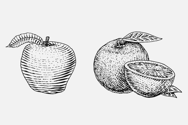 Satz handgezeichnete, gravierte frische früchte, vegetarisches essen, pflanzen, vintage, der orange und roten apfel sieht Premium Vektoren