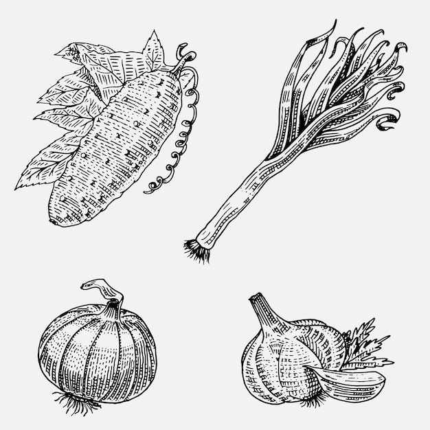 Satz handgezeichnete, gravierte gemüse, vegetarisches essen, pflanzen, vintage aussehende gurke, zwiebel und knoblauch, lauch Premium Vektoren