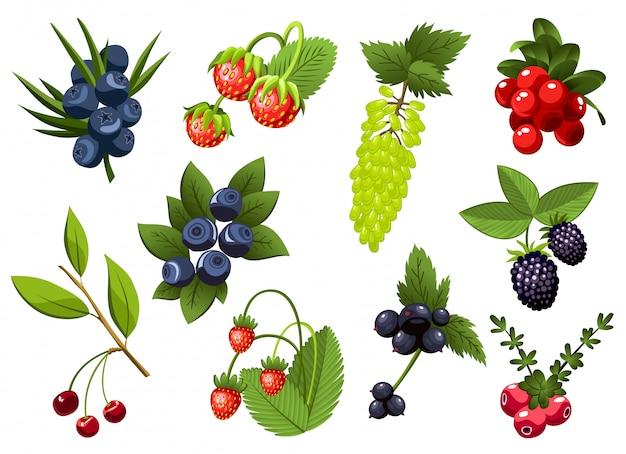 Satz handgezeichnete zweig johannisbeere, trauben, heidelbeere, erdbeere, kirsche, brombeere, preiselbeere, beeren mit blättern. frische sommerbeeren. Premium Vektoren