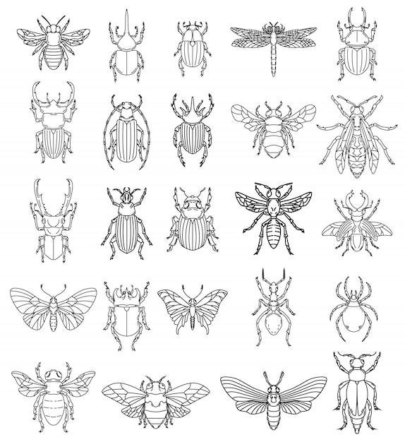 Satz insektenillustrationen auf weißem hintergrund. elemente für logo, etikett, emblem, zeichen, abzeichen. bild Premium Vektoren