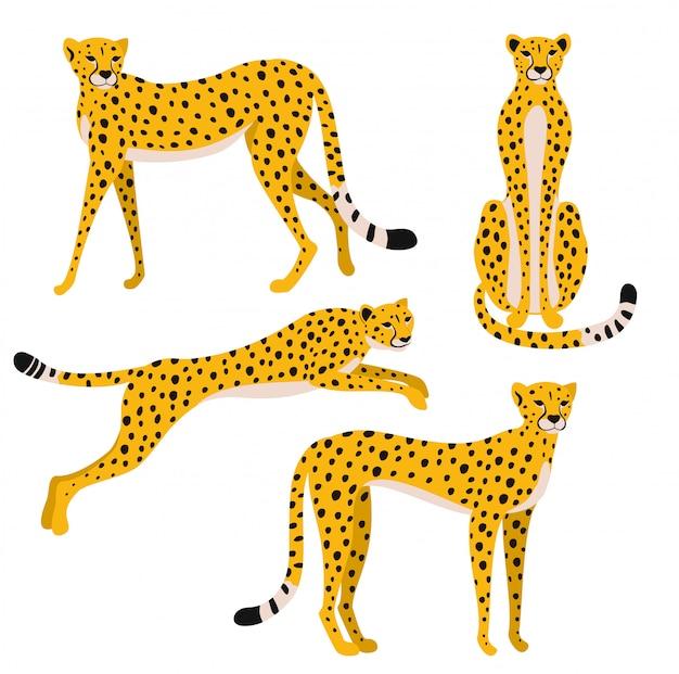 Satz leoparden lokalisiert auf weißem hintergrund. illustration. Premium Vektoren