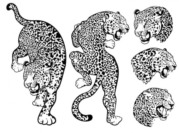 Satz leoparden. sammlung von porträts wilder tiere. Premium Vektoren