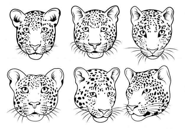 Satz leopardengesicht. sammlung von porträts wilder tiere. vektorillustration. Premium Vektoren