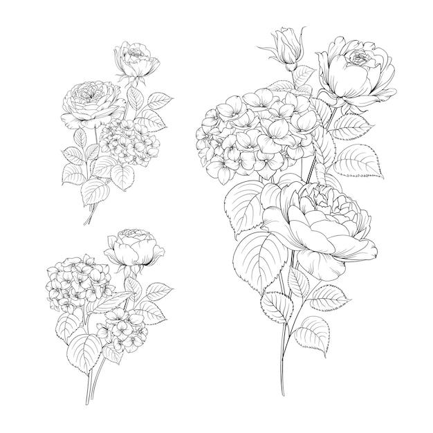 Satz linienhandzeichnung hortensie und rose. Kostenlosen Vektoren