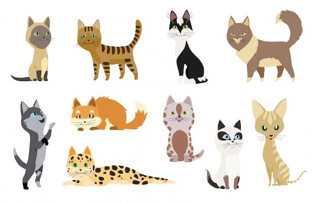Satz nette karikaturkätzchen oder -katzen mit unterschiedlichem farbigem pelz und markierungen, die sitzend stehen Premium Vektoren