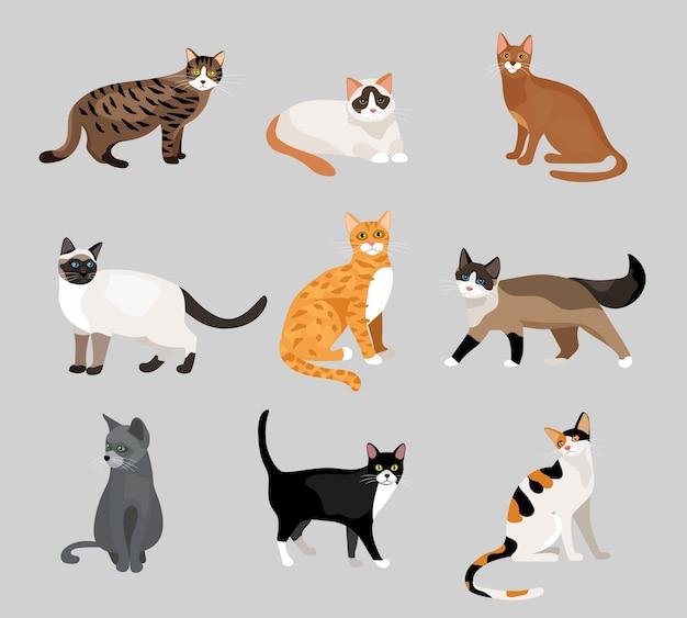 Satz niedliche karikaturkätzchen oder -katzen mit verschiedenfarbigem fell und markierungen, die sitzende oder gehende vektorillustrationen auf grau stehen Kostenlosen Vektoren