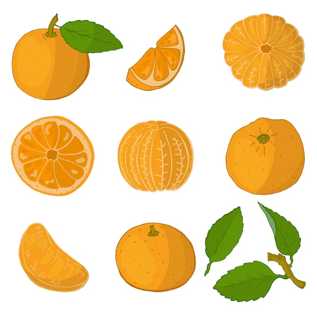 Satz orangen Premium Vektoren