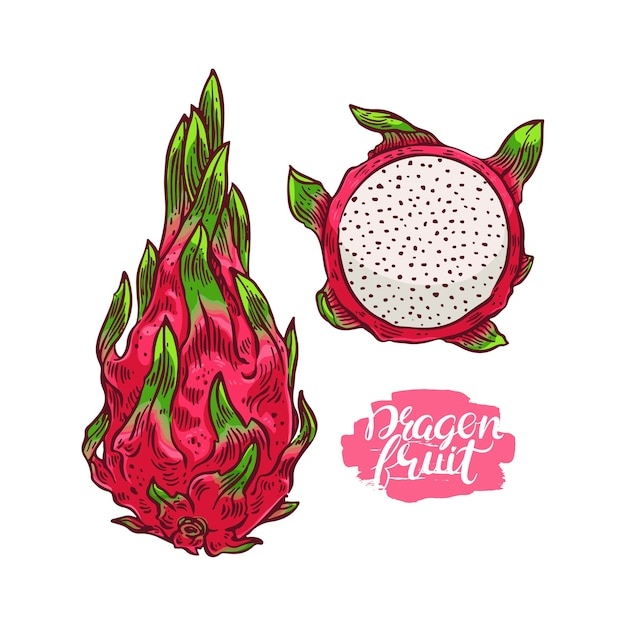 Satz reife bunte drachenfrucht. handgezeichnete illustration Premium Vektoren