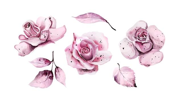 Satz rosa aquarellblätter und -rosen Premium Vektoren