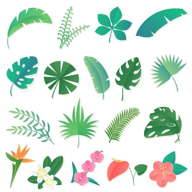 Satz tropischer blätter. palme, bananenblatt, hibiskus, plumeria-blüten Premium Vektoren