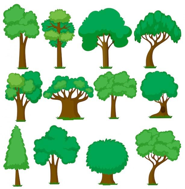 Satz verschiedene bäume Kostenlosen Vektoren