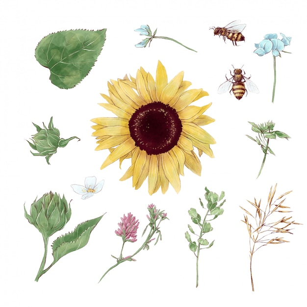 Satz von elementen von sonnenblumen und wildblumen im digitalen aquarellstil Premium Vektoren