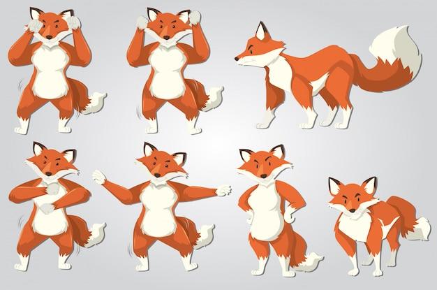 Satz von fox dance Kostenlosen Vektoren